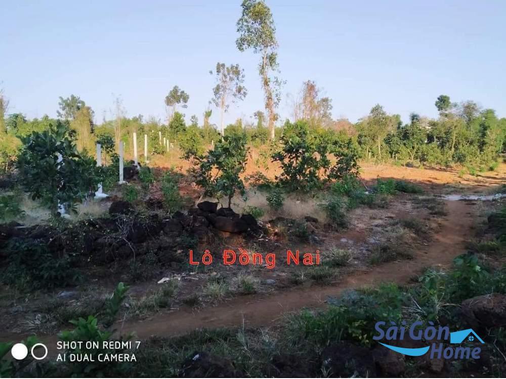 Bán lô đất cách chợ Phú Tân , Định Quán, Đồng Nai chỉ 800m